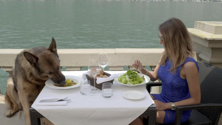 世界上最有钱的狗, 坐拥25亿财产, 每天还有豪车美女相伴!