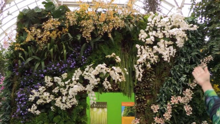 他是第一个在墙上种植物的人, 垂直花园的开创者, 阳台成私家花园