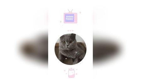 可爱的猫咪[图片评论