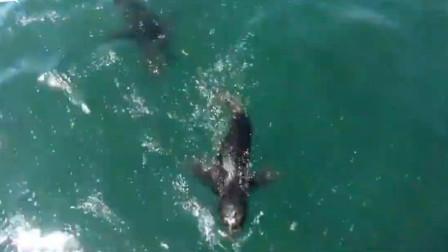 """南非 失散小海豹被放归大海 竟重新游回船上""""求抱抱"""""""