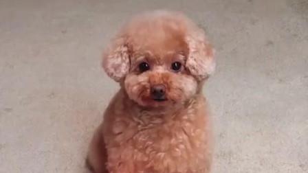 6宠物联萌 - 可爱狗狗小狗  小小小, 卖萌  萌萌萌