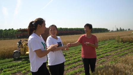 农村婆媳准备收麦子, 婆婆给俩儿媳分工协作, 一人一块好麦子