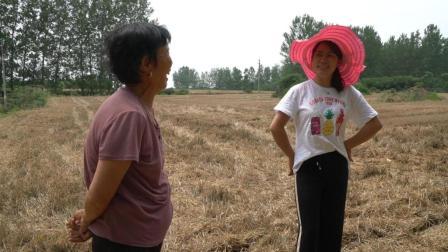 农村婆媳种豆子, 婆婆找个拖拉机耕种, 儿媳夸婆婆省钱还省力