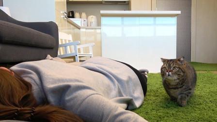 """主人在猫面前""""装死"""", 要看看猫咪的反应, 猜到了开头没猜到结局"""