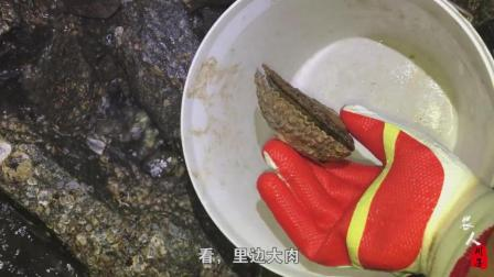 农人川子: 迎着雨去赶海, 伴着雷声回家! 川子第一次捡这么大扇贝