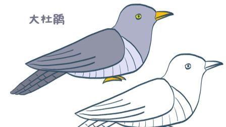 布谷鸟(大杜鹃)简笔画