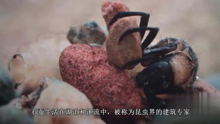 石蛾居然有这项技能, 你们见过这种昆虫吗? 技能让你意想不到!