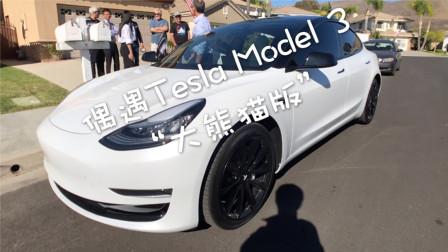 """偶遇Tesla Model 3""""大熊猫版"""""""