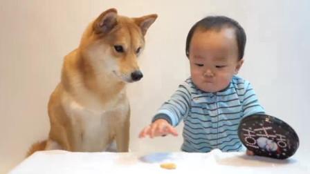 主人给了自家宝宝和狗狗一块饼干, 你猜接下来会发生什么事?