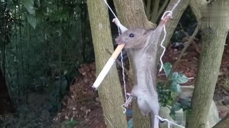 男子抓到老鼠后逼迫其抽烟, 连续抽了10根烟后, 男子无语了