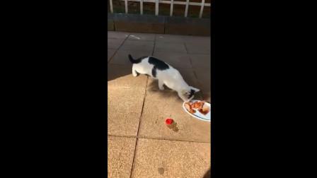 搞笑视频: 趁你们不注意, 我就偷走盘子了!