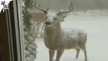 小鹿偷吃被抓包 冷漠面对镜头