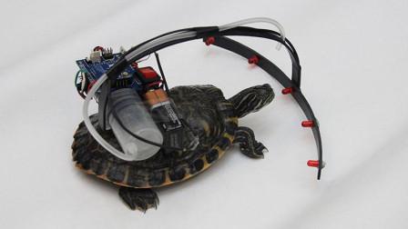 这神器, 把海龟变成机器人, 让它听你话行动, 什么原理
