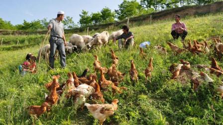 """国家扶持""""家庭农场"""", 农户该如何""""起步""""? 先了解清楚这3点"""