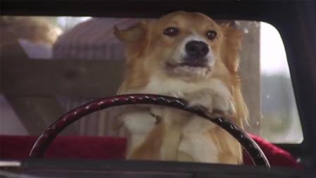 《灵犬宾果》小狗为了找到主人, 不但学会开车还智斗劫匪, 一部奇幻喜剧电影