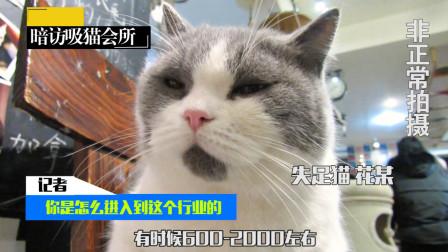 吸猫客亲身讲述, 记者深入暗访吸猫会所失足猫, 揭开行业内幕!