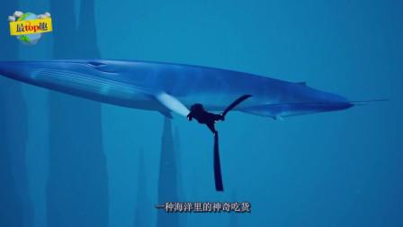 海洋吃貨, 光舌頭就有4噸多重, 這每天是要吃多少!