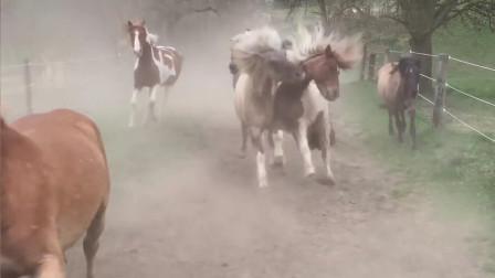小毛驴一改推磨常态和骏马赛跑, 快来围观! 简直逆袭了