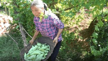农村四哥: 王四妈妈把苦瓜摘完了, 苦瓜架也拆了, 好多小的太可惜
