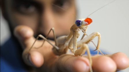 都知道螳螂捕蝉快如闪电, 老外给带上3D眼镜, 螳螂拳还能那么快?