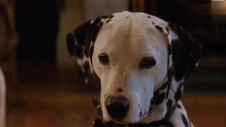 101斑点狗: 一只小狗宝宝了, 斑点狗爸爸非常伤心