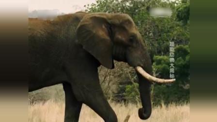 """公大象数公里外听到母象求偶""""长途电话"""" 立即马不停蹄飞速赶来"""