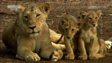 地球上狮子豹子还有老虎 所有猫科动物原来都是起源于中国