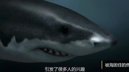 恐龙时代既然也有鲸鱼,那能不能算顶级的猎食者呢