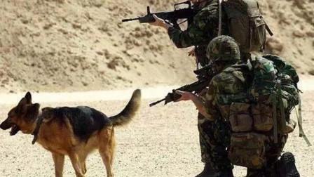 退役军犬是怎么处理的?各国做法都不一样,美国最残忍?