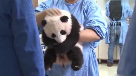 大熊猫宝宝哎呀妈呀脑瓜疼