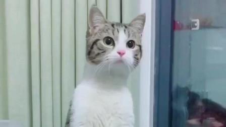 老吴在隔壁打麻将,没想到把猫粮都输光了,真