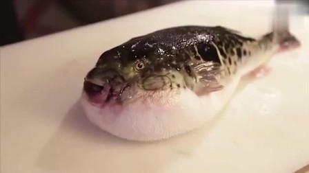 猎奇美食!看看韩国美食,河豚鱼生鱼片,网友