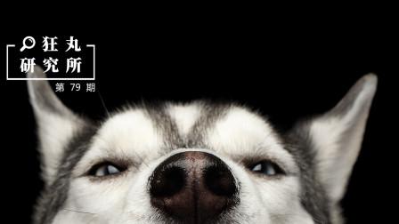 居然有狗不会汪汪叫?二哈是最傻的狗么?10个关于狗的有趣常识 | 狂丸研究所