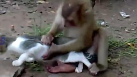 猴哥猴哥,你真了不得