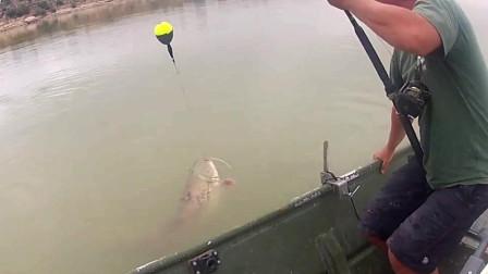 尾巴拍的船身哐哐响,你说这条鱼有多大?