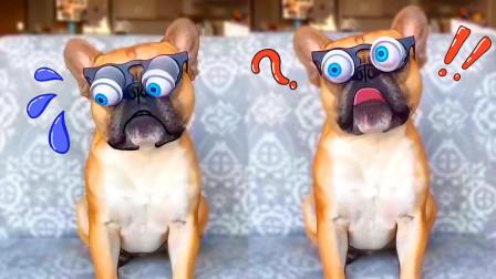 这是我见过最傻的狗!又二又奇葩!