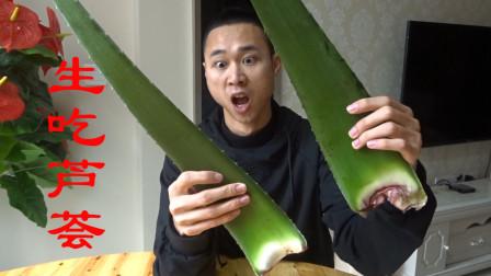 挑战网红美食,生吃1米长大芦荟,嚼出一嘴的鼻涕!