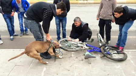 狗子紧咬自行车不松,车主赶紧拆了车胎,看看里面有什么?