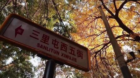 北京的秋天来了 三里屯西五街桦树黄了