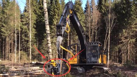 国外大型伐木机器,没事不要引进,要不然森林就没了?