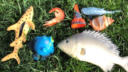 新奇海洋动物之八种神奇海洋动物,乐宝识动物