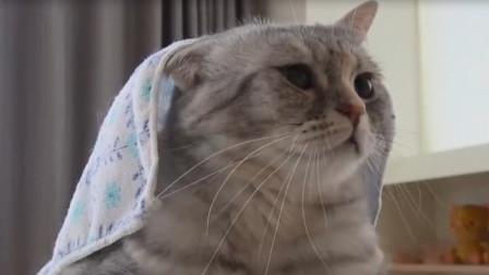 家里的一股水流竟引来了一个猫咪家族,网友:好奇害死猫