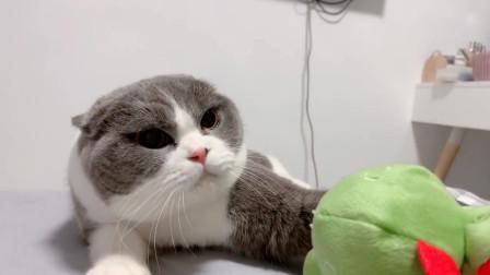 铲屎官拿着恐龙玩具去逗猫咪,这怕是真的生气了吧?