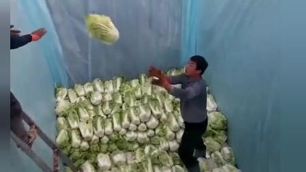 风味人间:一般卖不出去没人要了,就这样淹咸菜