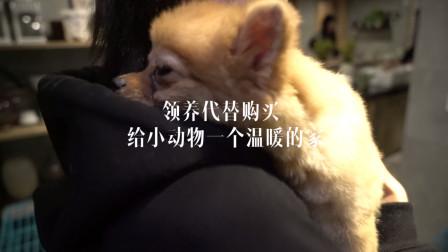 """【""""益""""起过年】领养代替购买,给小动物一个温暖的家"""