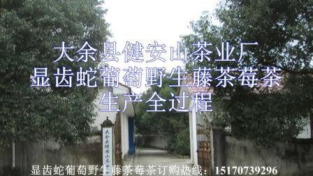 莓茶显齿蛇葡萄野生藤茶生产全程视频(高清)