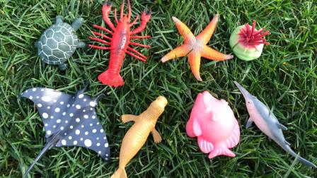 认识巴西龟等7种海洋动物,乐宝识动物