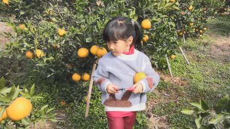 带女儿置办年货,女儿说要自己摘新鲜的桔子,摘了好大一箩筐
