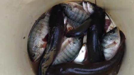暴雨过后,荒田的鱼又开始多了,农村小哥不一会就抓了好几条