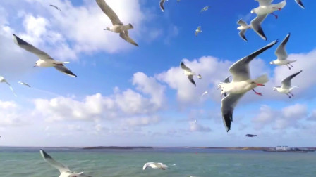 沙鸥翔集,锦鳞游泳,岸芷汀兰,郁郁青青,一切都那么美好